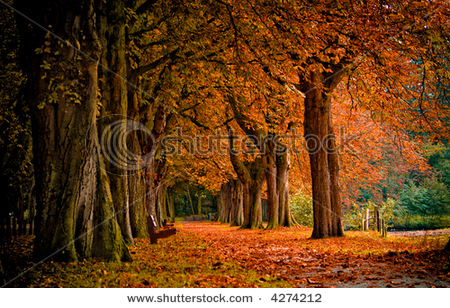stock-photo-autumn-colors-in-the-forest-4274212.jpg