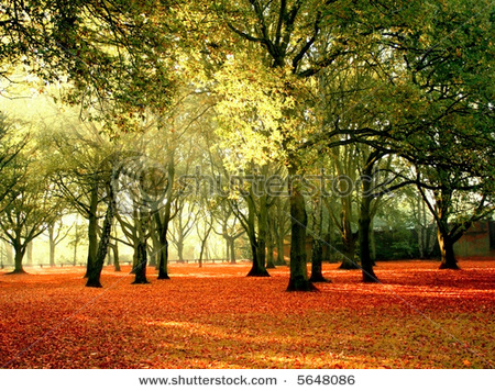 stock-photo-beautiful-quiet-park-in-bright-autumnal-colors-with-bright-colored-leaves-covering-the-ground-5648086.jpg